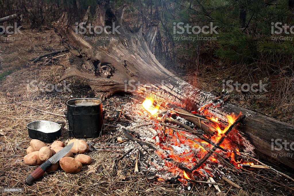 Fire in wood stock photo