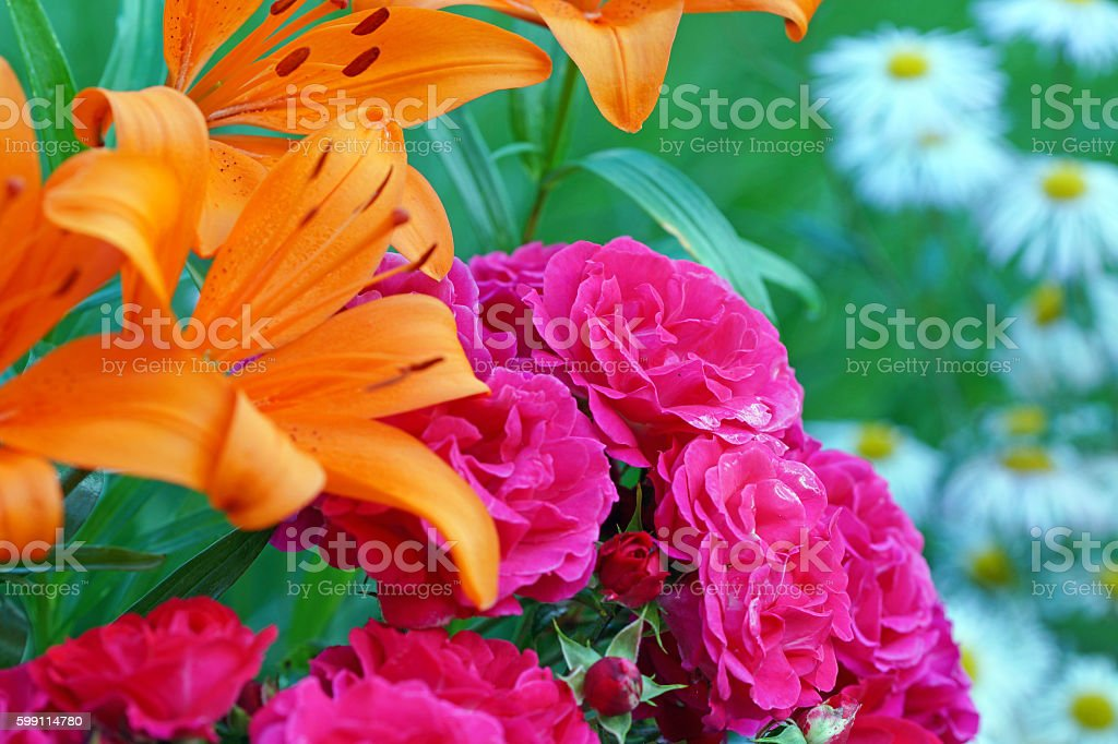 Fire lily, rose 'Heidefeuer' and summer asters stock photo