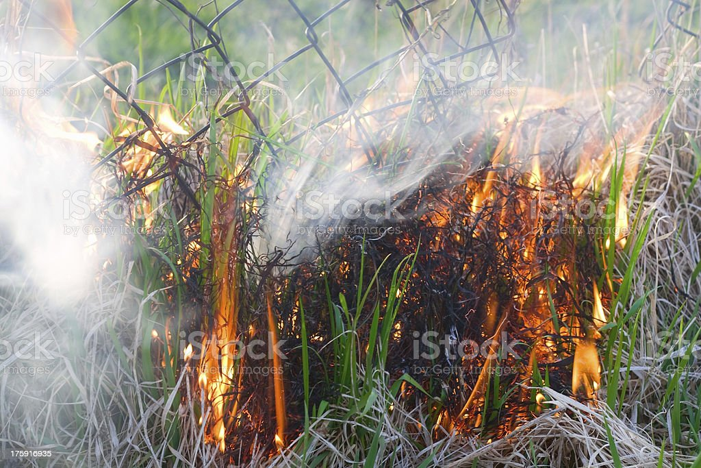 fire nature royalty-free stock photo