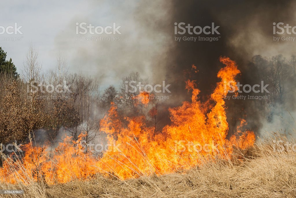 Fire on agricultural land near forest stock photo
