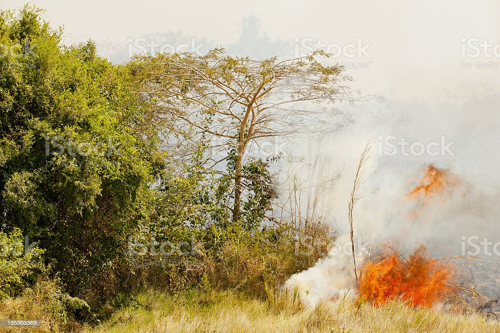 fire on the plain - controlled field burn royalty-free stock photo