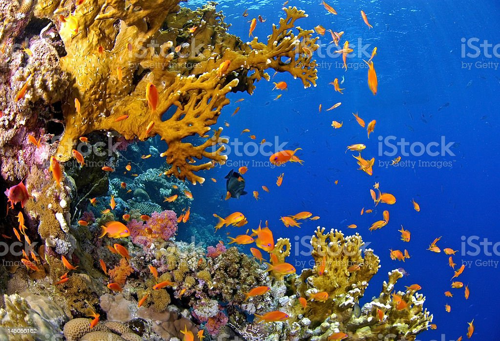 Fire reef stock photo