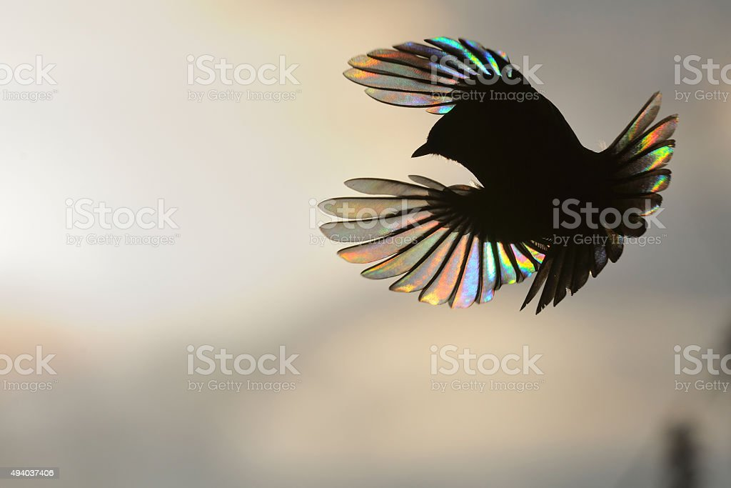 Firebird In Black and Colors stock photo