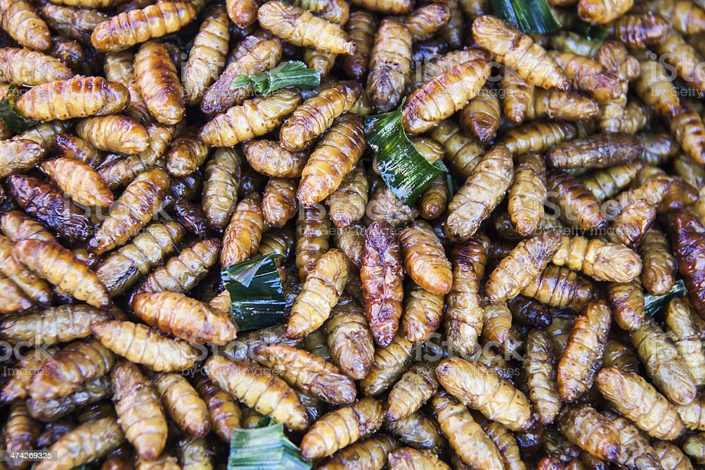fired silk worm as snack in Asia countries royalty-free stock photo