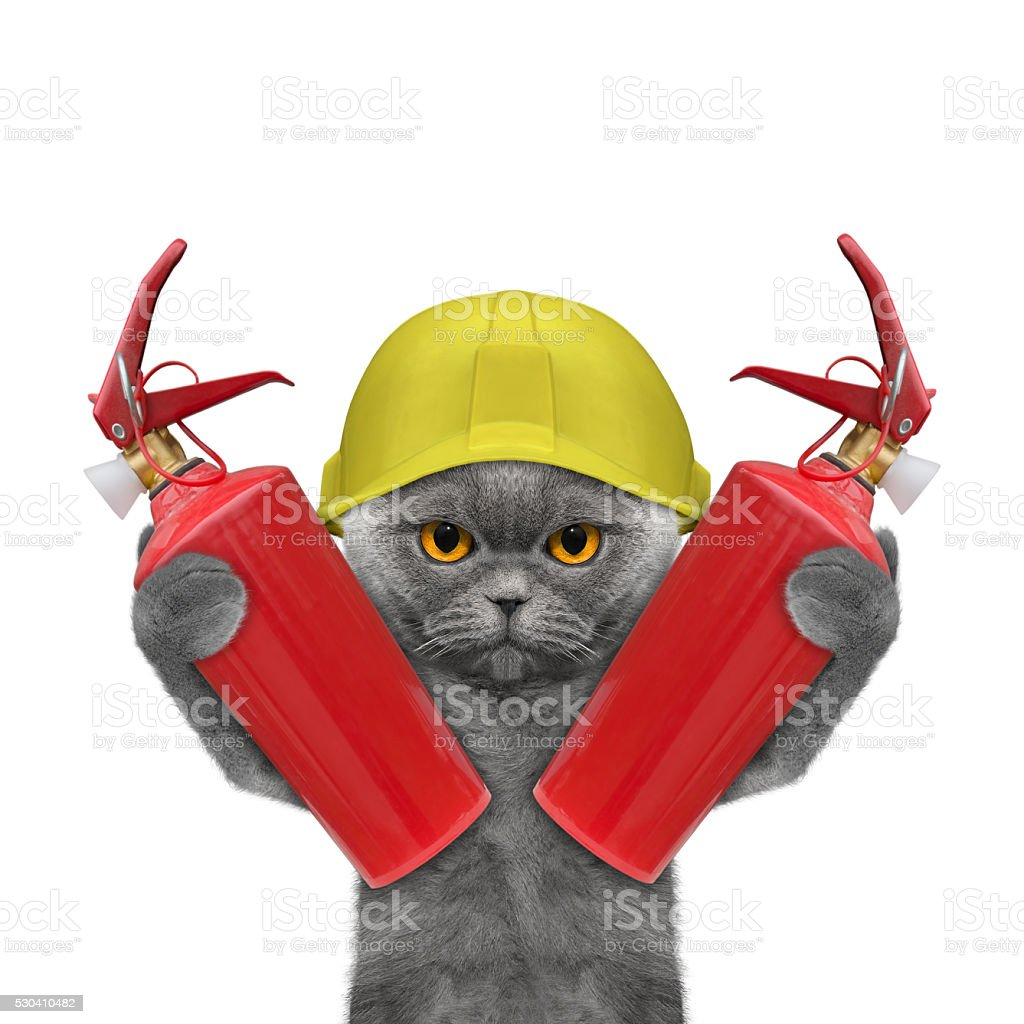 firefighter cat is ready to work stock photo