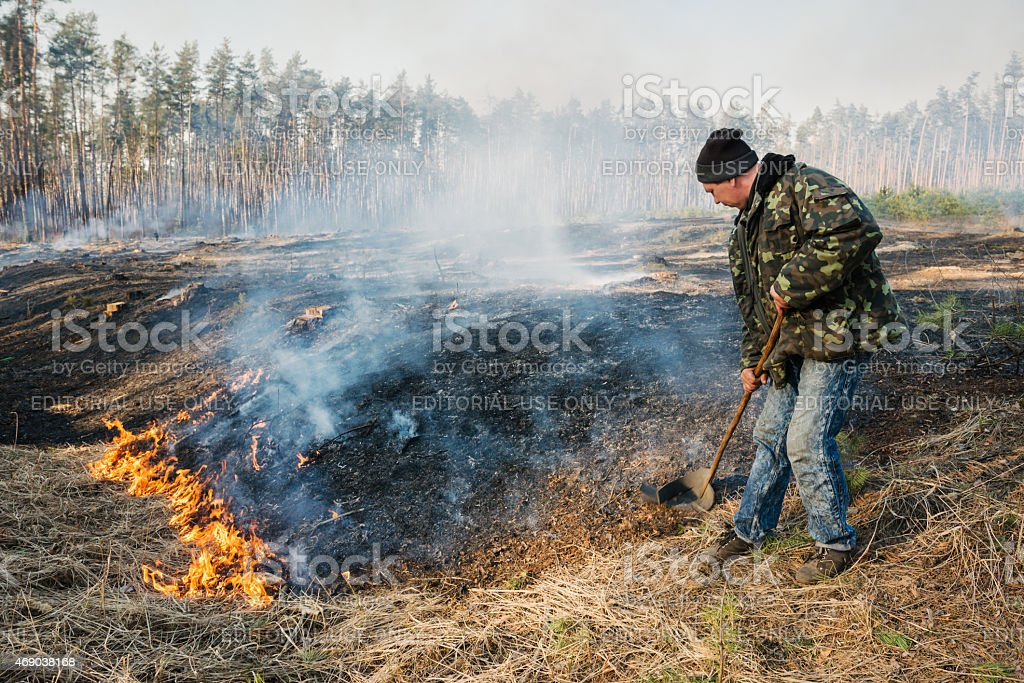 Firefighter use leafs branch for forest fire suppression stock photo