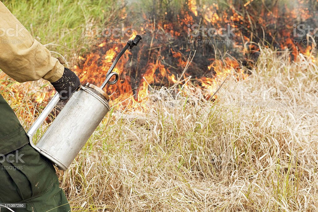 Firefighter Using a Drip Torch to Ignite Dried Grass stock photo