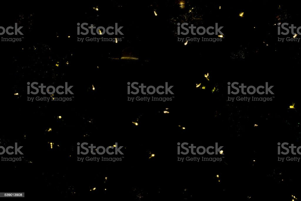 Fireflies? abstract stock photo