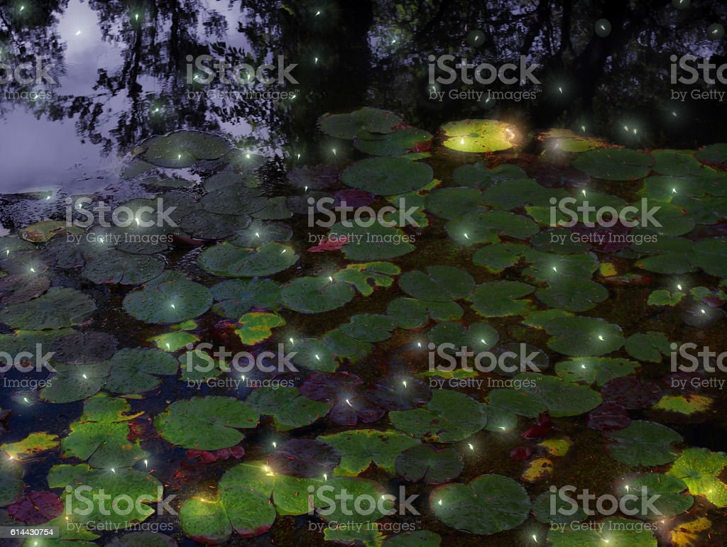 fireflies and lily pods stock photo