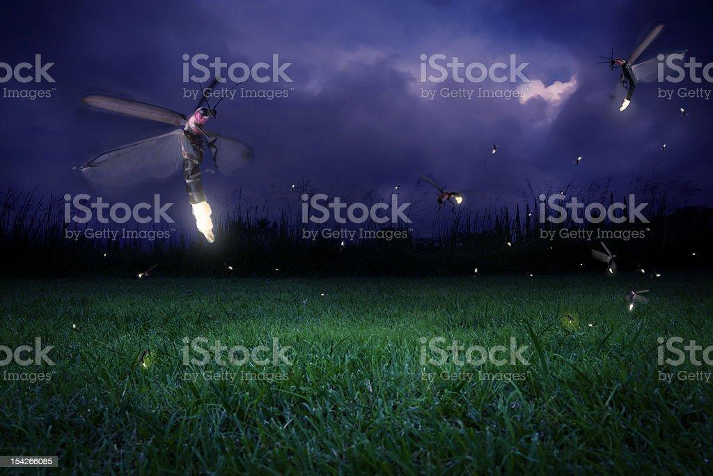 Fireflies at night royalty-free stock photo