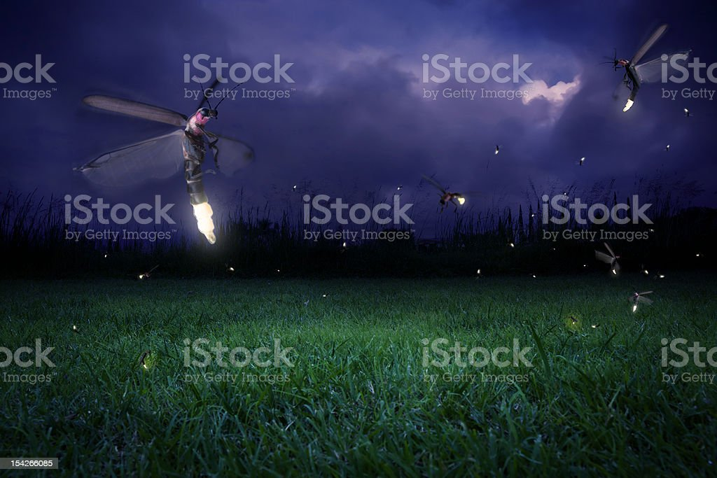 Fireflies at night stock photo