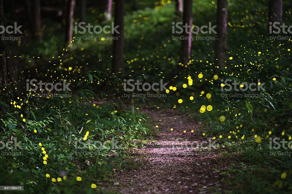 Fireflies in a moonlit forest stock photo