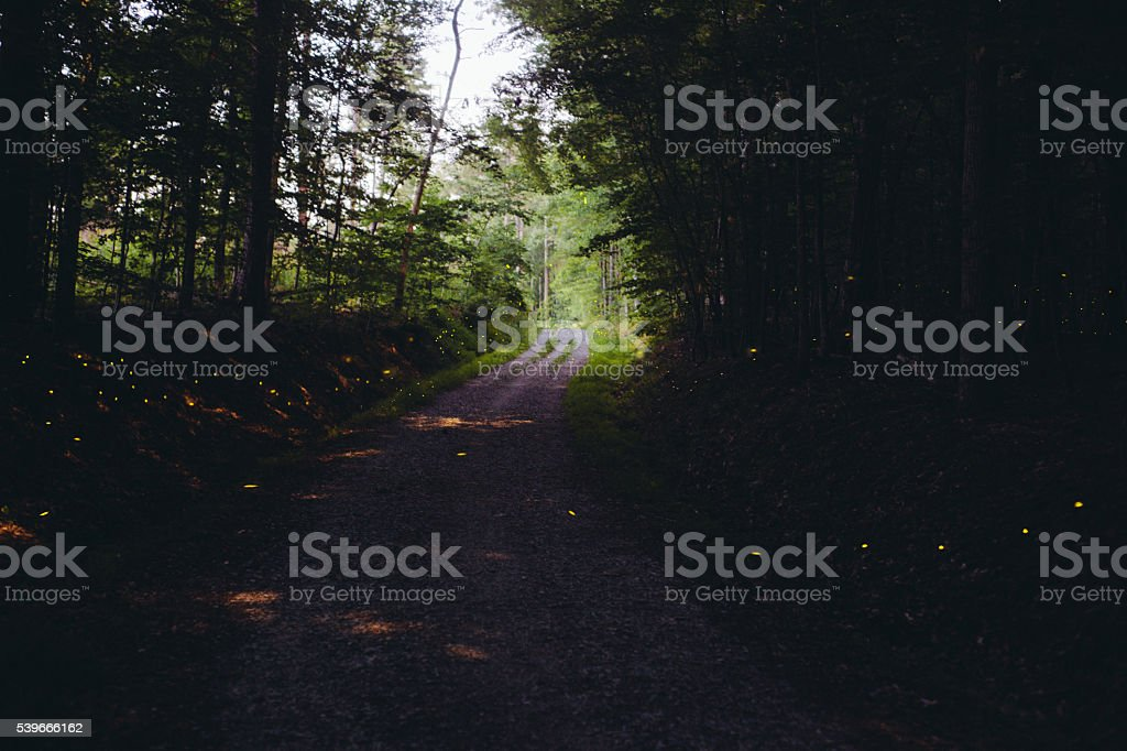 Fireflies in the forest stock photo