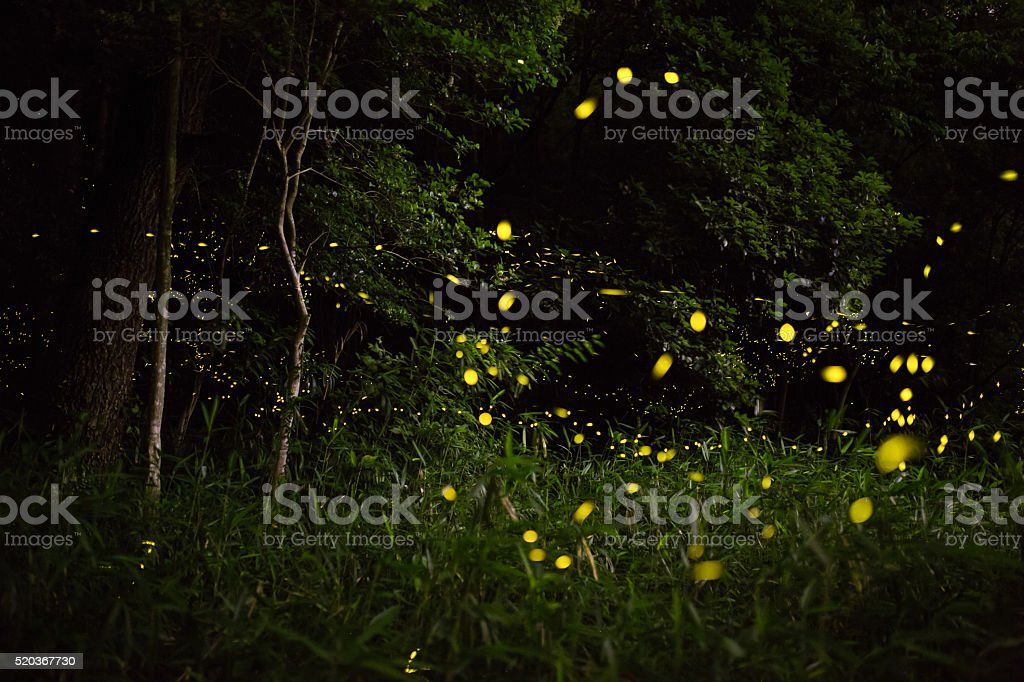 Fireflies light up the forest at night stock photo