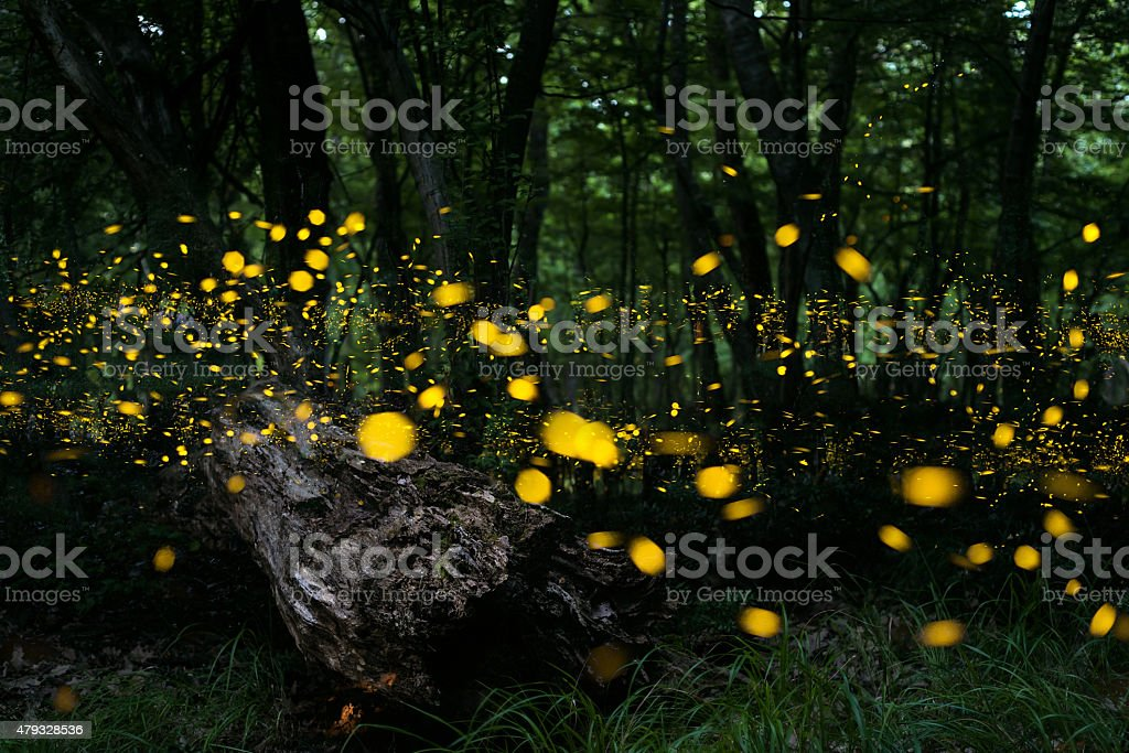 Fireflies stock photo
