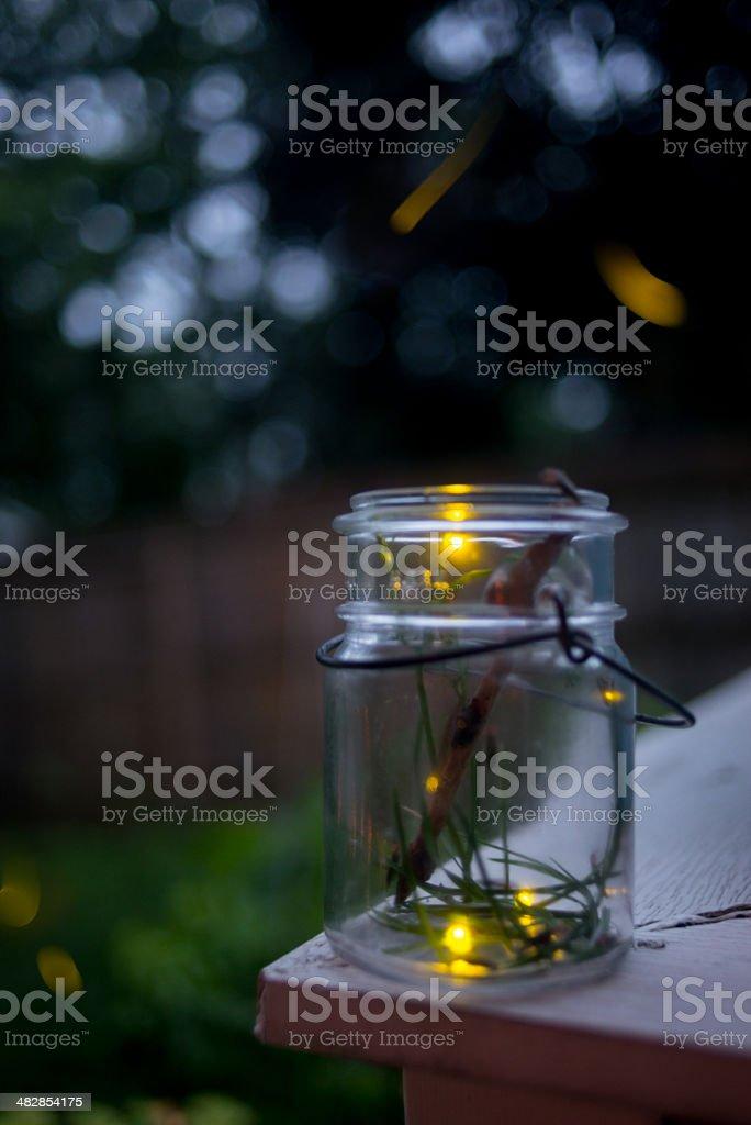 Fireflies (Lightening Bugs) stock photo