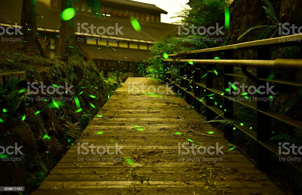 Fireflies were flying above the wooden footpath stock photo