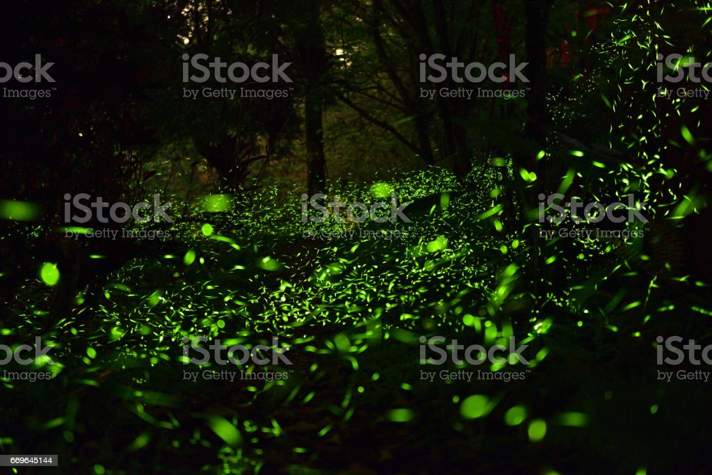 Fireflies were flying above tussock at mountainous region stock photo