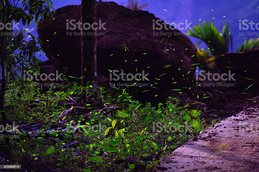 Fireflies were flying above tussock beside stone in the night stock photo