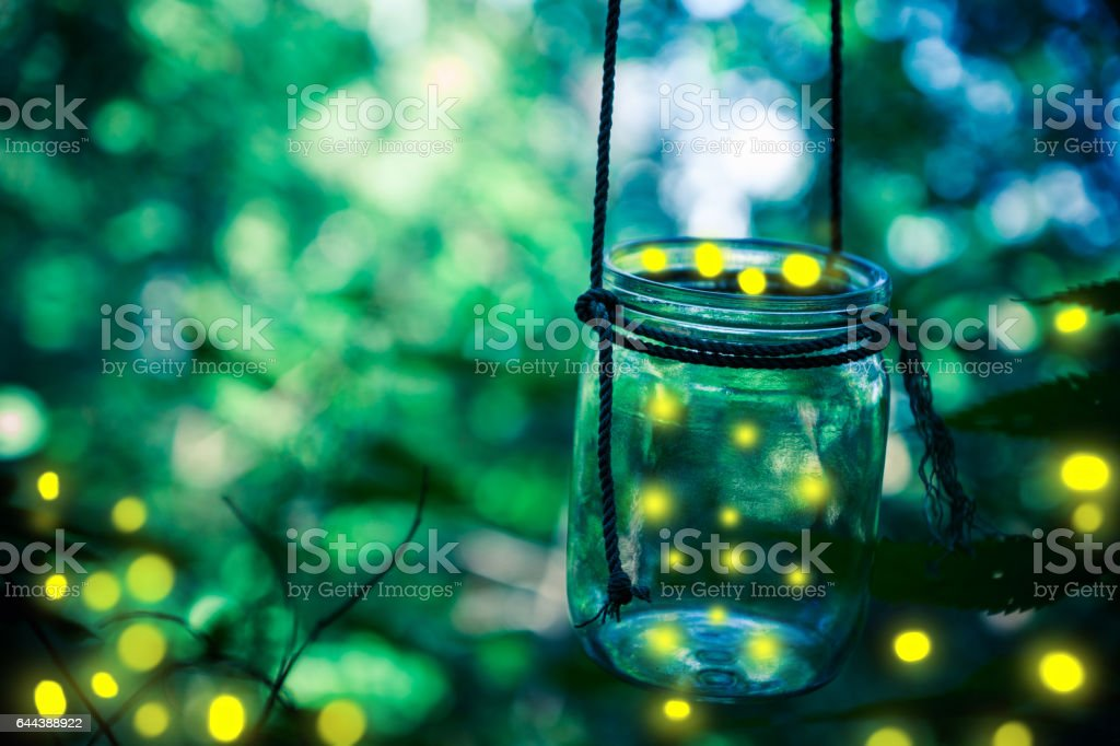 Firefly in a jar stock photo