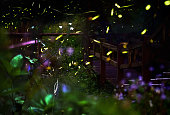 Firefly/ Night in the forest with fireflies. Long exposure of fireflies.
