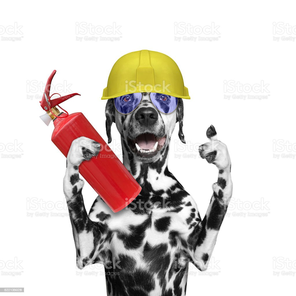 fireman rescues a dog from the fire all stock photo