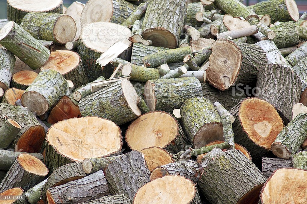 Firewood after cutting. stock photo