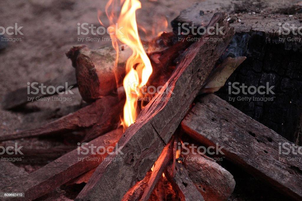 Firewood and animal bone in rural thai knowledge. stock photo