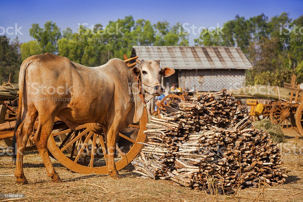 firewood for sale royalty-free stock photo