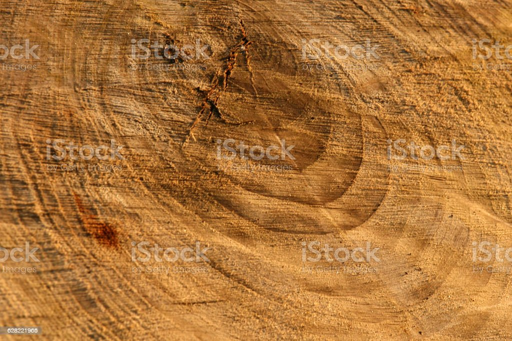 Firewood in Forest in the wilderness, Canada stock photo