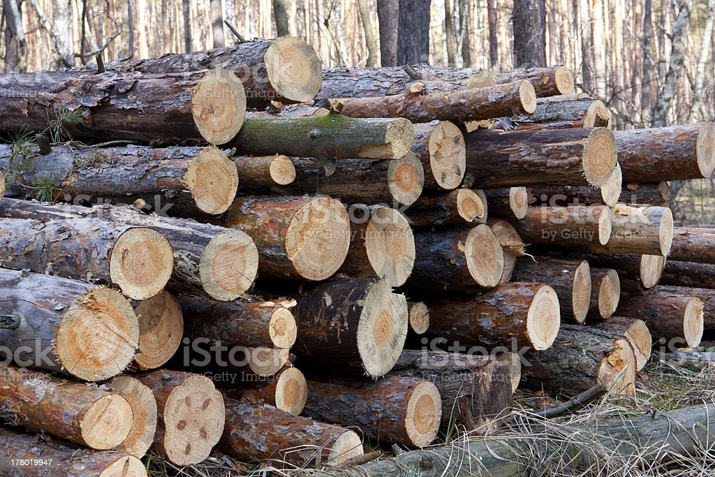 Firewood store royalty-free stock photo