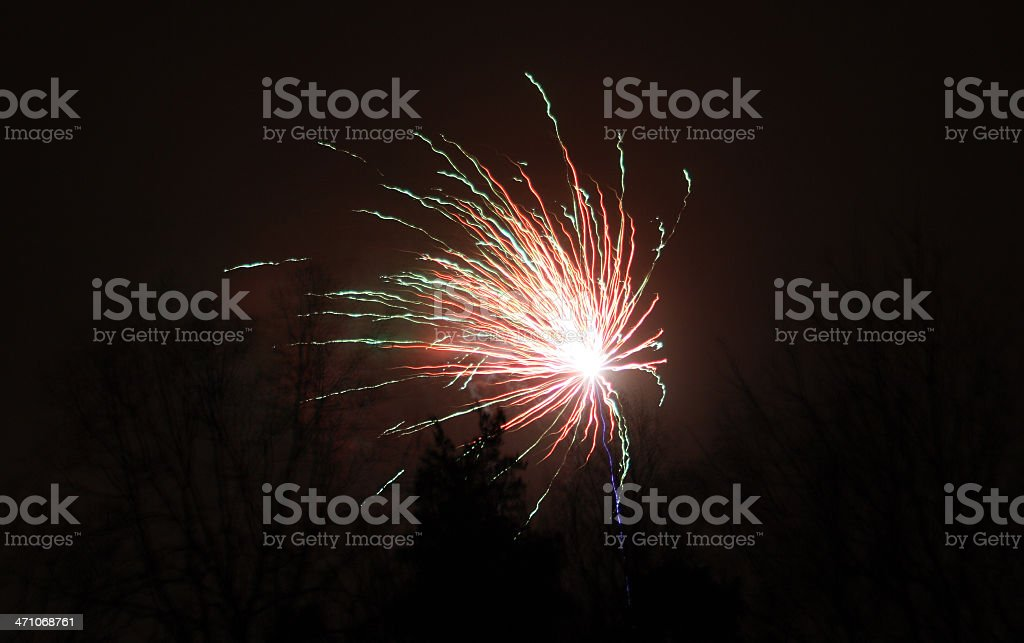 Fireworks in the trees royalty-free stock photo