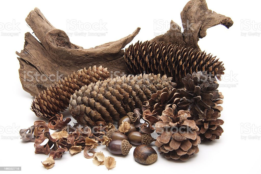 Firs and pine cones with root royalty-free stock photo