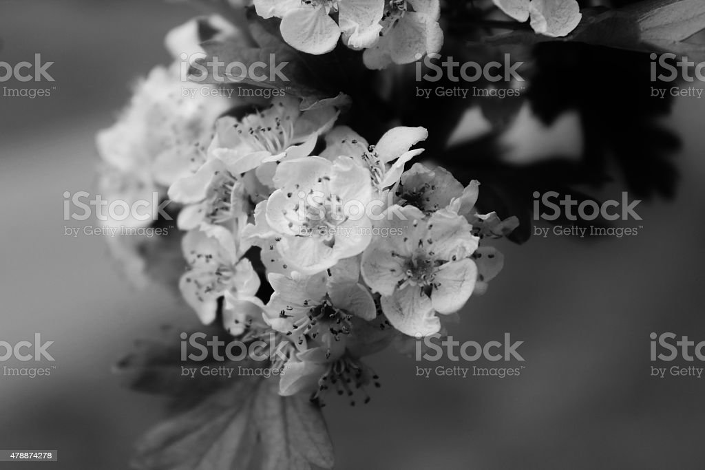 First blossoms stock photo