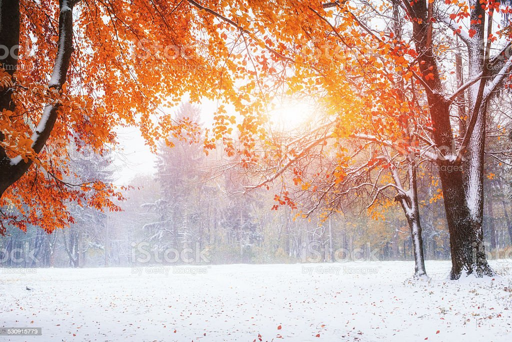first days of winter stock photo