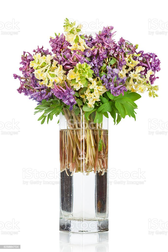 First forest springs flowers in vase stock photo