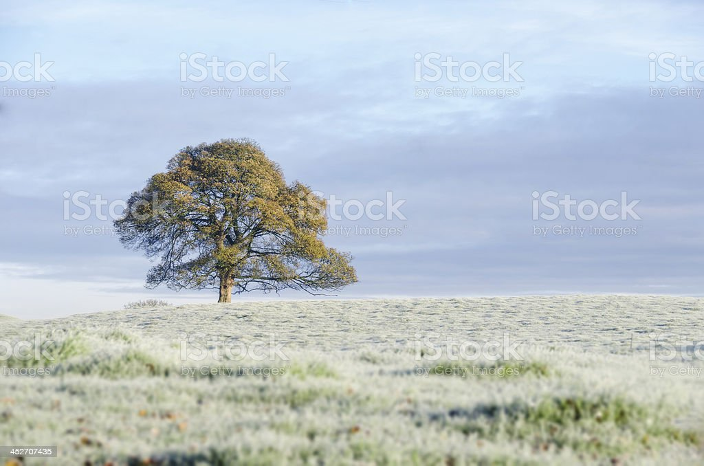 First Frost stock photo