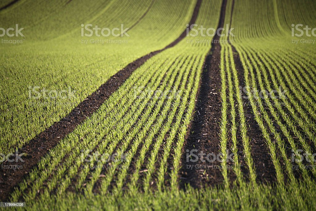 First green on a field in spring stock photo