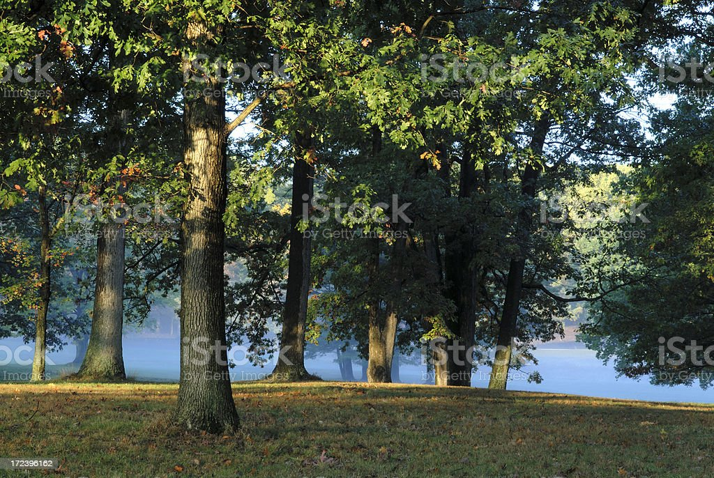 First Light on Oak Tree royalty-free stock photo