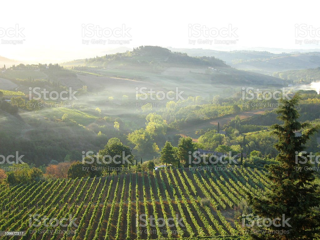 First Light over Tuscan Vineyards 5 royalty-free stock photo