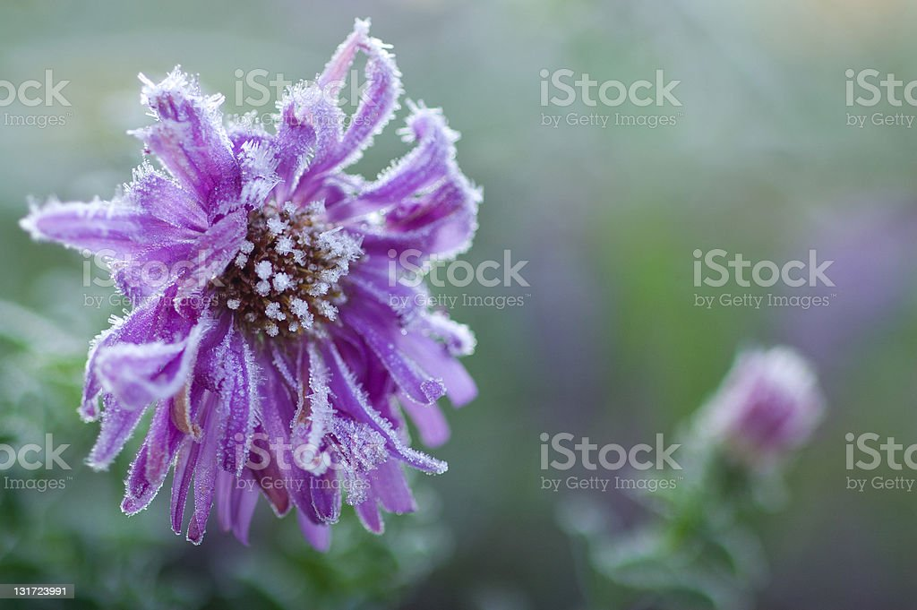 First morning frost royalty-free stock photo