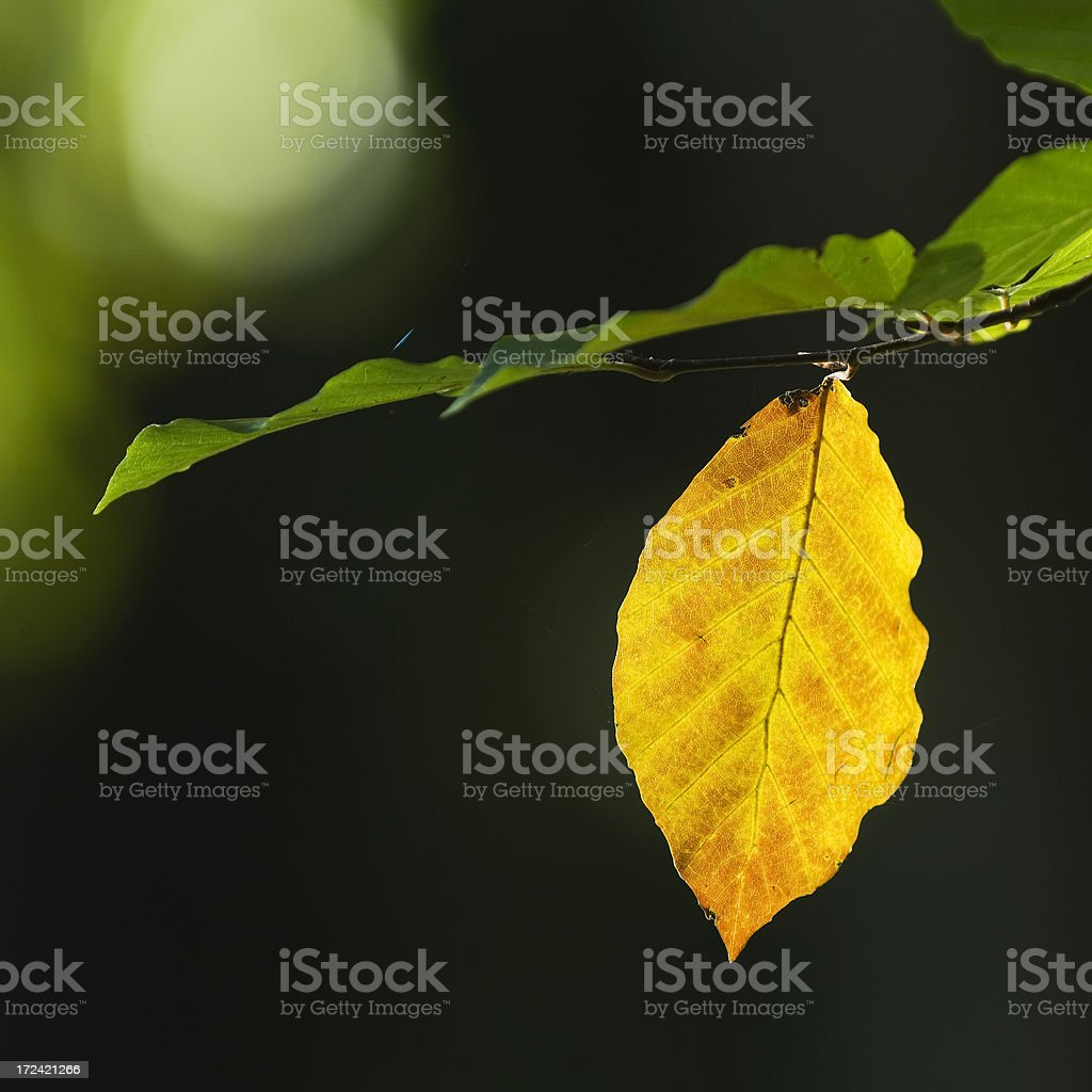 First sign of autumn royalty-free stock photo