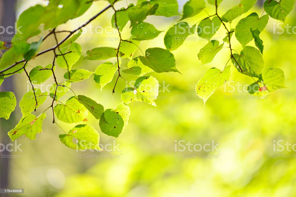 First signs of autumn royalty-free stock photo