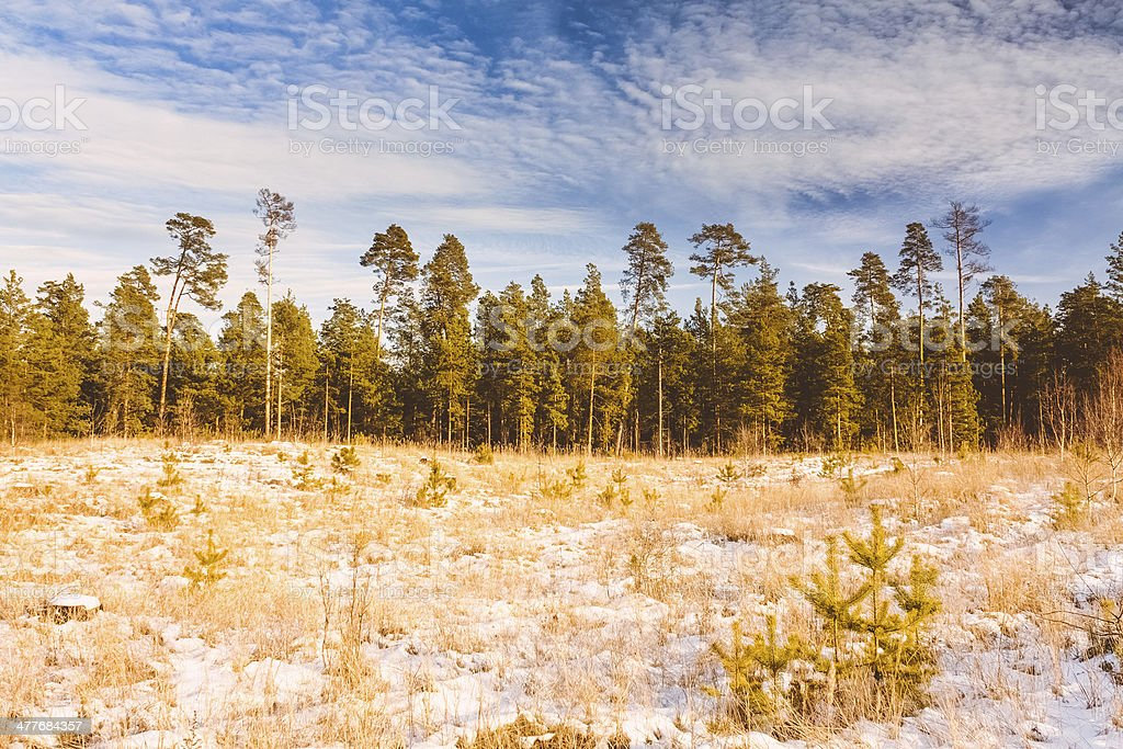 First Snow Covered The Dry Yellow Grass In Forest royalty-free stock photo