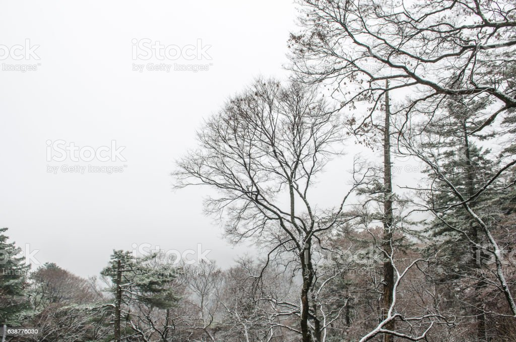first snow fall in the mountains stock photo