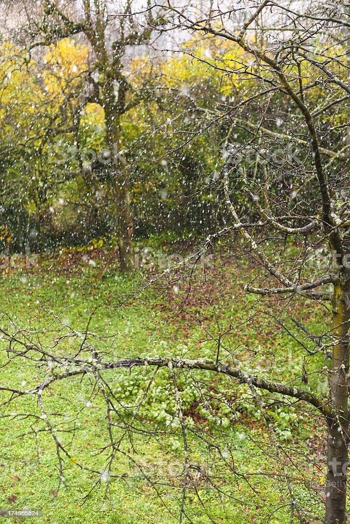 First snow flakes on garden stock photo