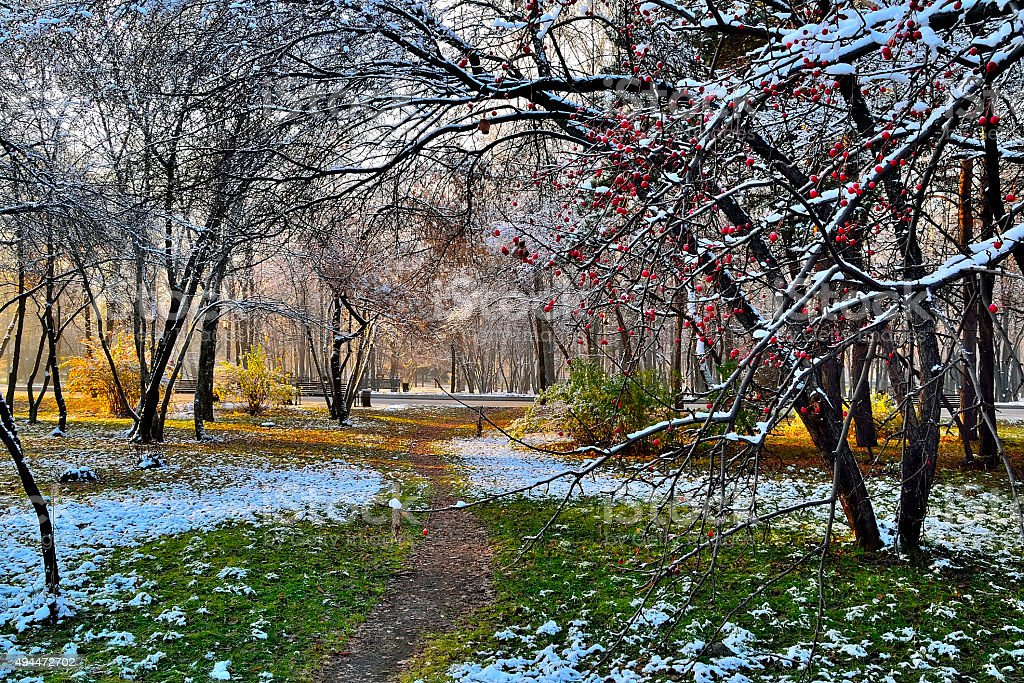 First snow in the city park stock photo