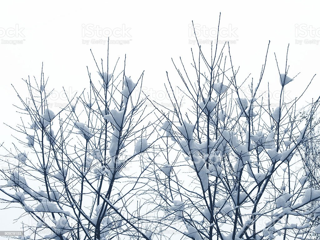 First snow on branches, the winter royalty-free stock photo