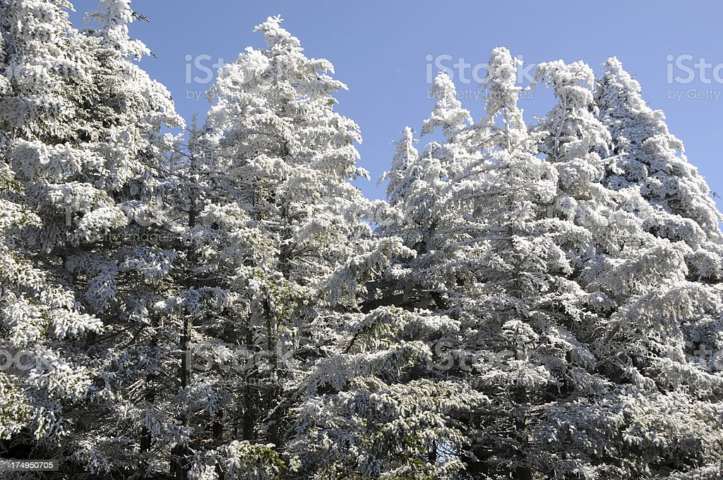 First snow on the Appalachian Mountains royalty-free stock photo