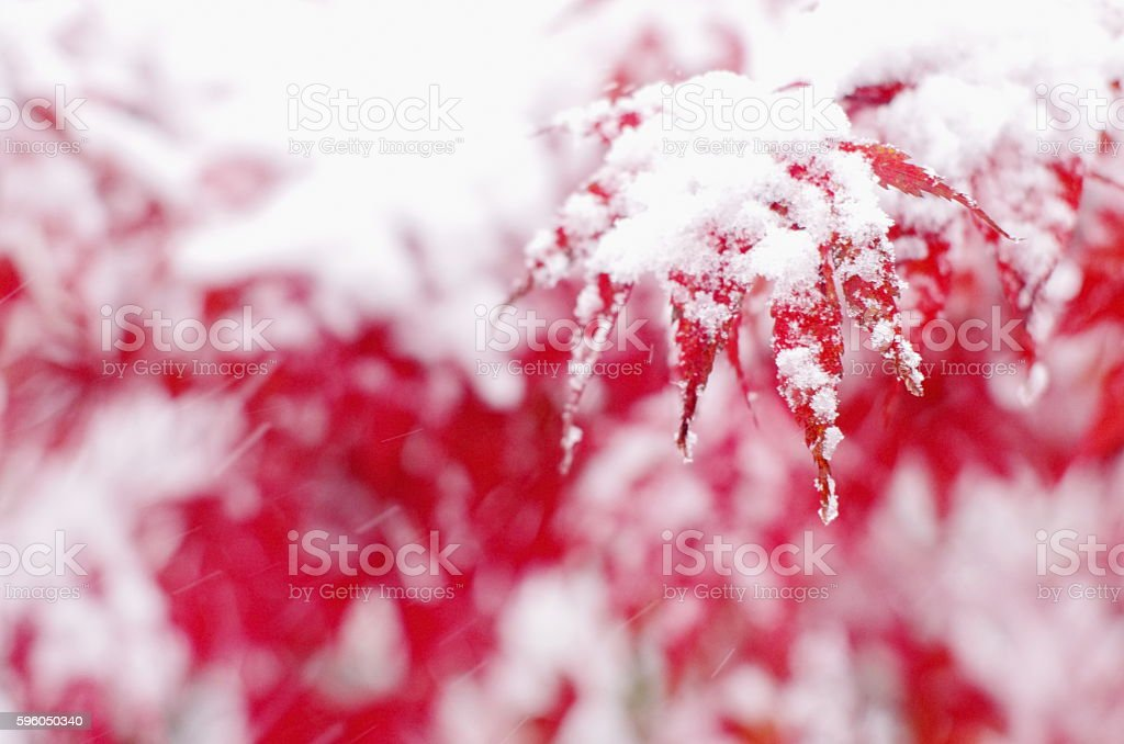 first snow onstet on winter stock photo